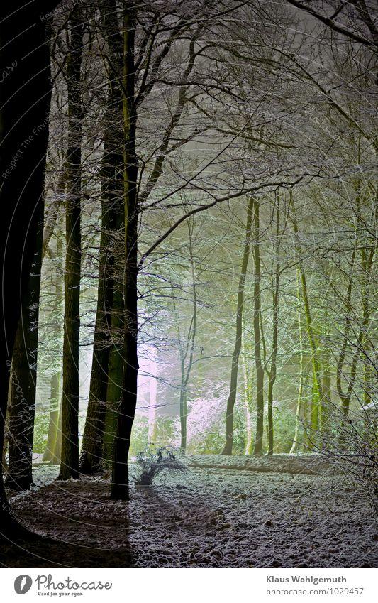 Erster Schnee Umwelt Natur Landschaft Winter Baum Park Wald leuchten braun gelb grau grün schwarz weiß Farbfoto Außenaufnahme Menschenleer Textfreiraum unten