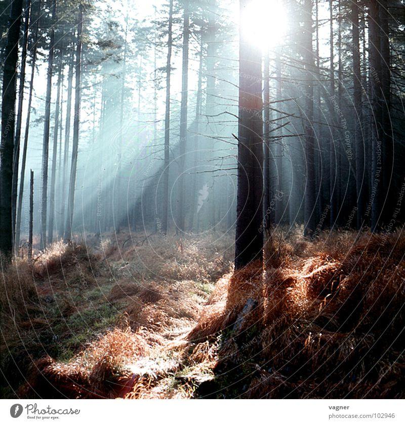 Morgen im Wald Natur Baum Wald Herbst