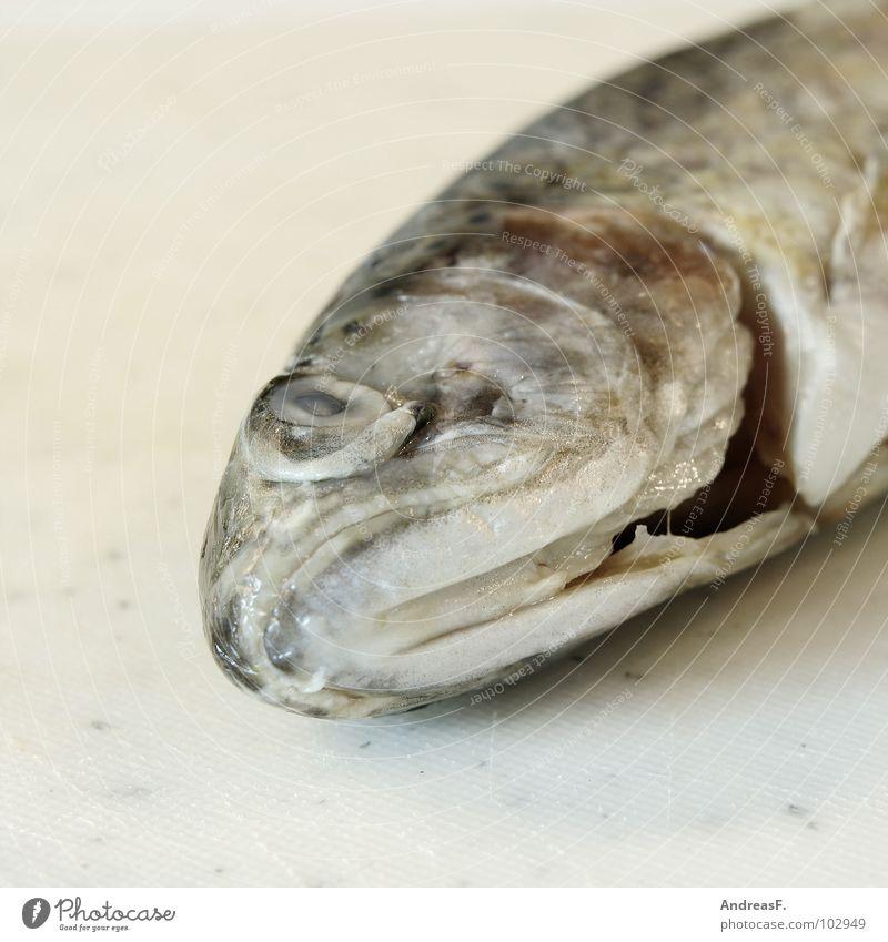 Forelle blau Regenbogenforelle kochen & garen fischig Fischkopf Küche Fischgericht Angeln Tier Fleisch Ernährung Fischauge Tod