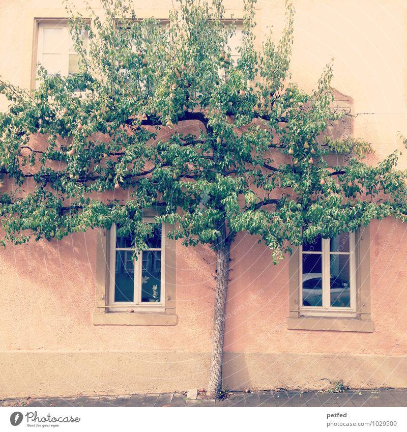 Häusliche Ansichten XIII Pflanze grün Baum Haus Fenster gelb Wand natürlich Mauer Fassade Wohnung orange Häusliches Leben einzigartig Altstadt