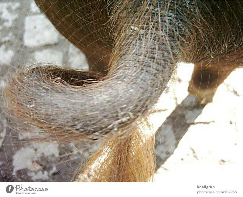 Ich geh dann mal... Schwein braun Tier Borsten Rückansicht Kreis gehen Säugetier Ringelschwanz Kopfsteinpflaster Haare & Frisuren Schweinebeine