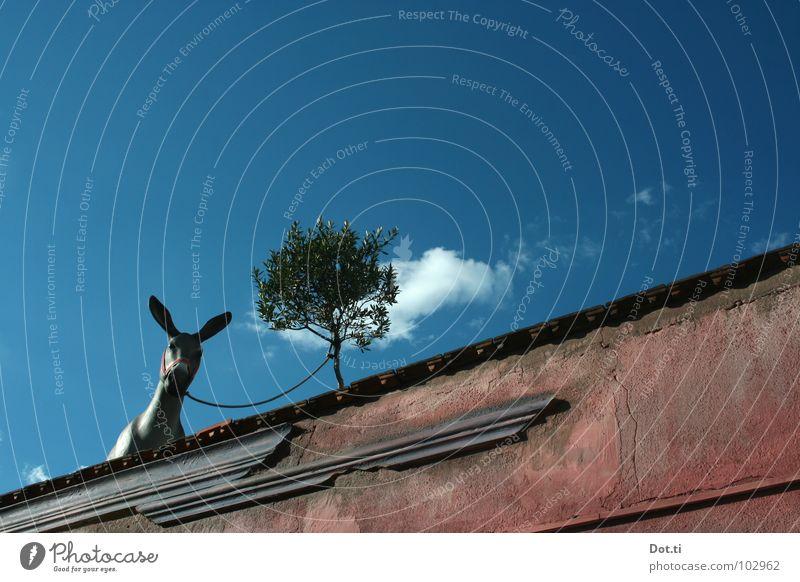 Edeldomestik Himmel Tier Wand Mauer grau Fassade verrückt warten Aussicht Ausflug Seil Lebewesen Gleise Haustier Säugetier gefangen
