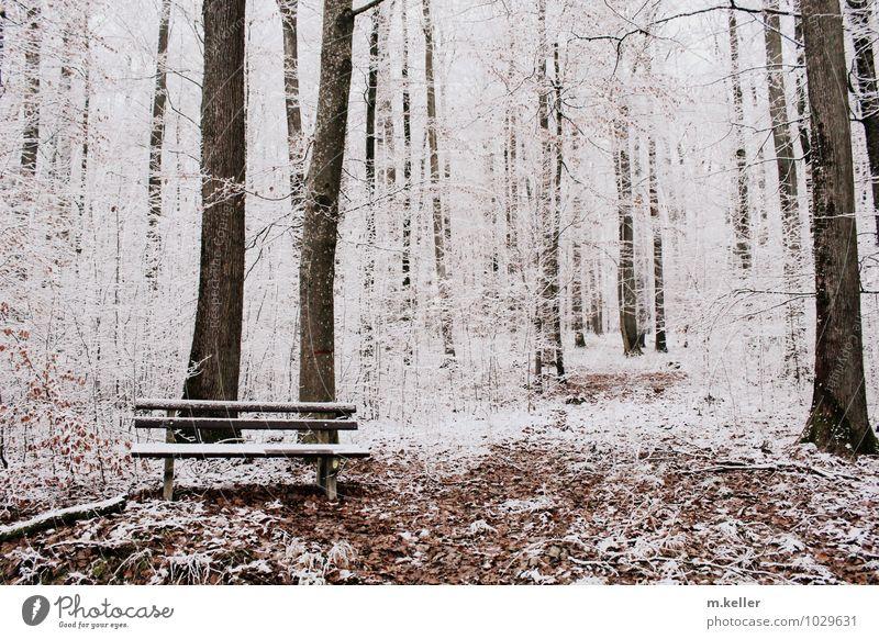 Ruhe Einsamkeit ruhig Wald Schnee Tod Zufriedenheit Hoffnung Bank Inspiration Erschöpfung