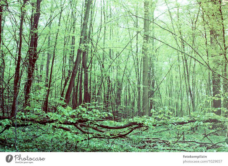 deutscher regenwald Umwelt Natur Landschaft Pflanze Tier Frühling Baum Efeu Wald nachhaltig natürlich Stimmung Frühlingsgefühle Einsamkeit entdecken Erholung