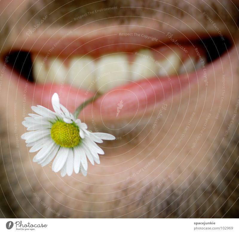 Blumenkind Mann Natur Pflanze Sommer Freude Gesicht Frühling Blüte lustig Mund Zähne Lippen Stengel Bart skurril