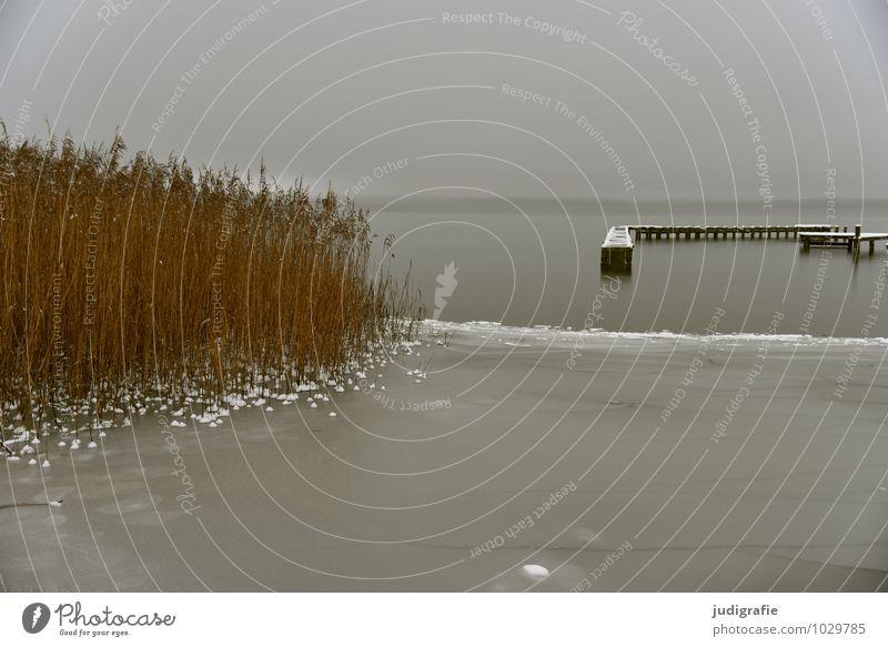 Winter am See Umwelt Natur Landschaft Wasser Klima schlechtes Wetter Eis Frost Küste Seeufer Anlegestelle natürlich trist grau Einsamkeit kalt ruhig Schilfrohr