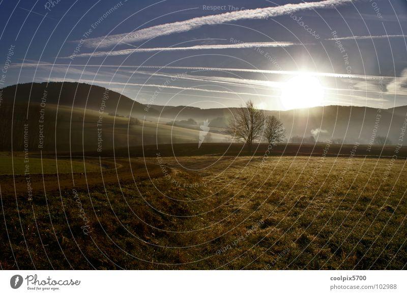 Gegenlicht Licht Feld Wald Wiese Baum Nebel Sonnenaufgang Freizeit & Hobby Sommer Landschaft Natur Erholung
