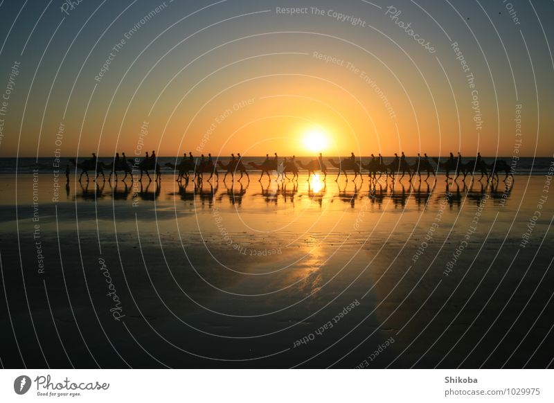 Camelride in the sunset Reiten Sommer Strand Meer Mensch Menschengruppe Nutztier Wildtier Kamel Tiergruppe Kitsch Romantik Fernweh Idylle
