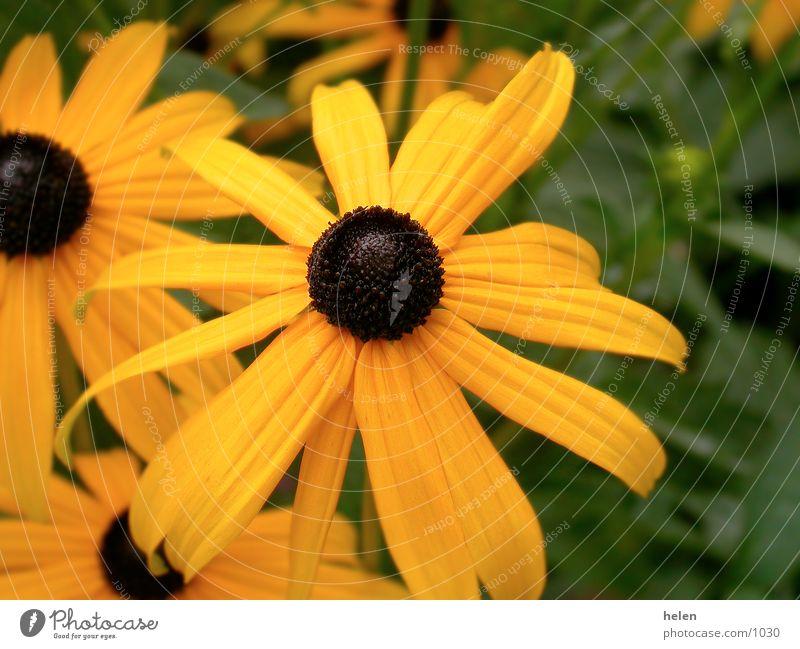la floraison jaune Natur gelb Blüte