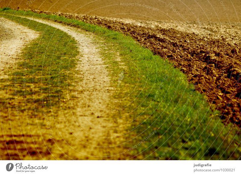 Acker Landwirtschaft Forstwirtschaft Natur Pflanze Erde Feld Wege & Pfade natürlich braun grün Kurve Spuren Gras Farbfoto Außenaufnahme Menschenleer Tag