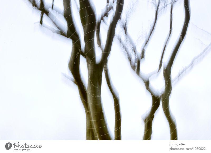 Buchen Umwelt Natur Pflanze Himmel Baum außergewöhnlich natürlich Stimmung Angst Bewegung träumen Vergänglichkeit Irritation Schwindelgefühl schwindelig Rausch