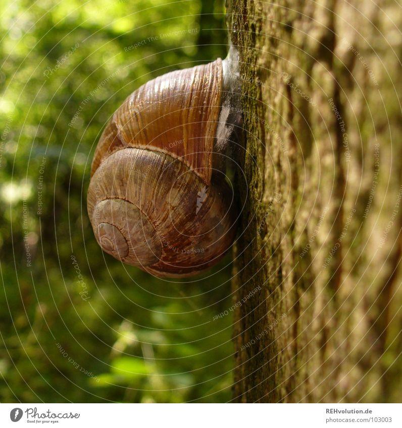 hey schnecke! Baum grün Pflanze Tier Wald festhalten Baumstamm Schnecke Baumrinde kleben Wildnis Schneckenhaus zurückziehen Rückzug