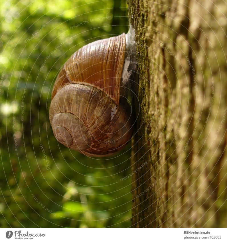 hey schnecke! Baum Wald Schneckenhaus Rückzug zurückziehen kleben festhalten grün Wildnis Tier Pflanze Baumrinde Baumstamm Makroaufnahme Nahaufnahme festkleben