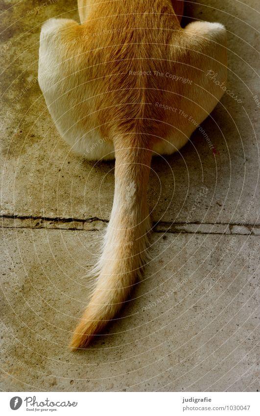 Hund ruhig Tier sitzen warten Beton weich schlafen Fell Haustier Schwanz Labrador