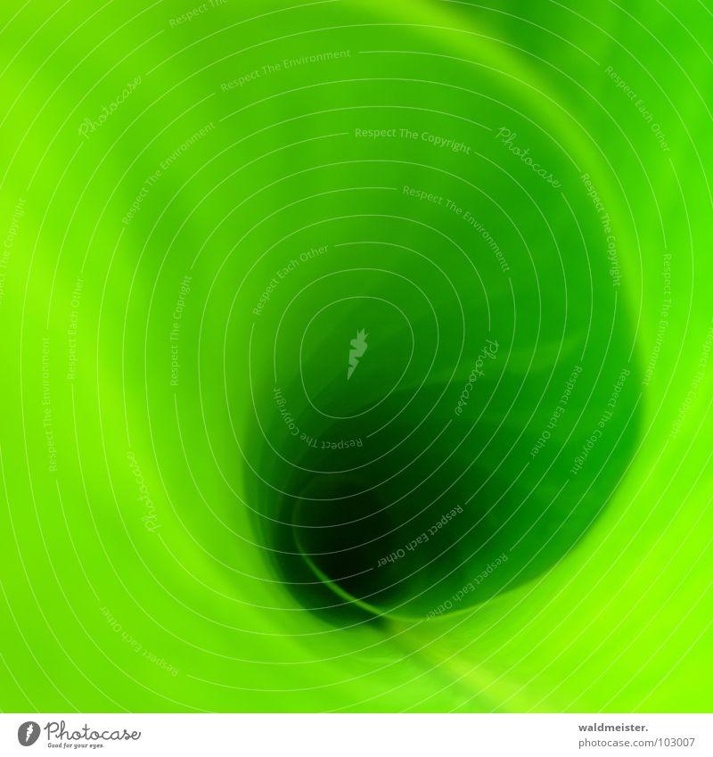 Grüner Strudel Natur grün Pflanze Leben Energie Hoffnung Wachstum Spirale Blume Wasserwirbel Photosynthese Canna