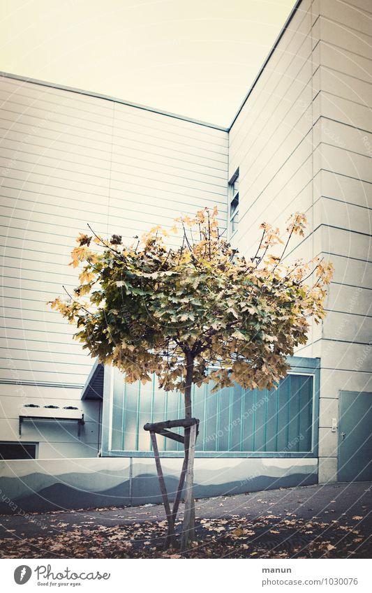 urban classic Umwelt Herbst Baum Laubbaum Blatt herbstlich Stadt Stadtzentrum Haus Platz Gebäude Architektur Mauer Wand Fassade Asphalt Beton dehydrieren