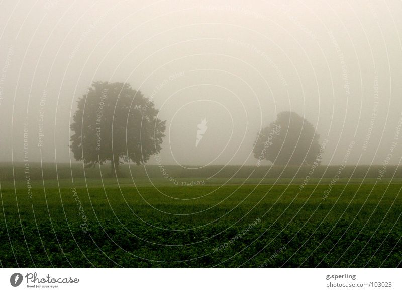 Sommerregennebel Baum grün Wiese grau Regen Feld Nebel nass feucht unheimlich