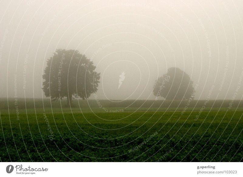 Sommerregennebel Baum Nebel grün grau nass Feld Wiese unheimlich feucht Regen