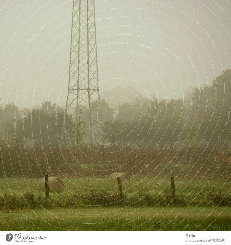 Windstille Technik & Technologie Energiewirtschaft Strommast Umwelt Natur Landschaft Klima Nebel Baum Gras Wiese Weide natürlich grau grün ruhig Zaun Zaunpfahl