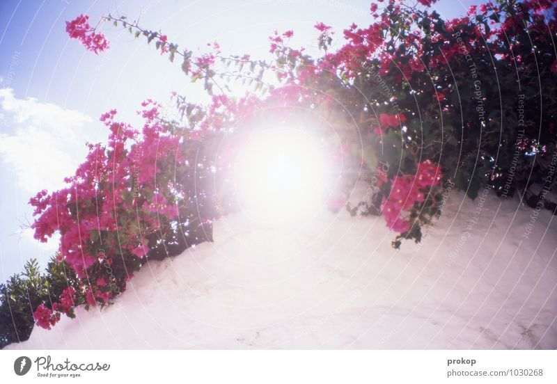 Rancho Rosalinde Natur Pflanze Farbe Blume Wolken Freude Wärme feminin Mauer Glück rosa Wetter Wachstum Sträucher frisch Fröhlichkeit