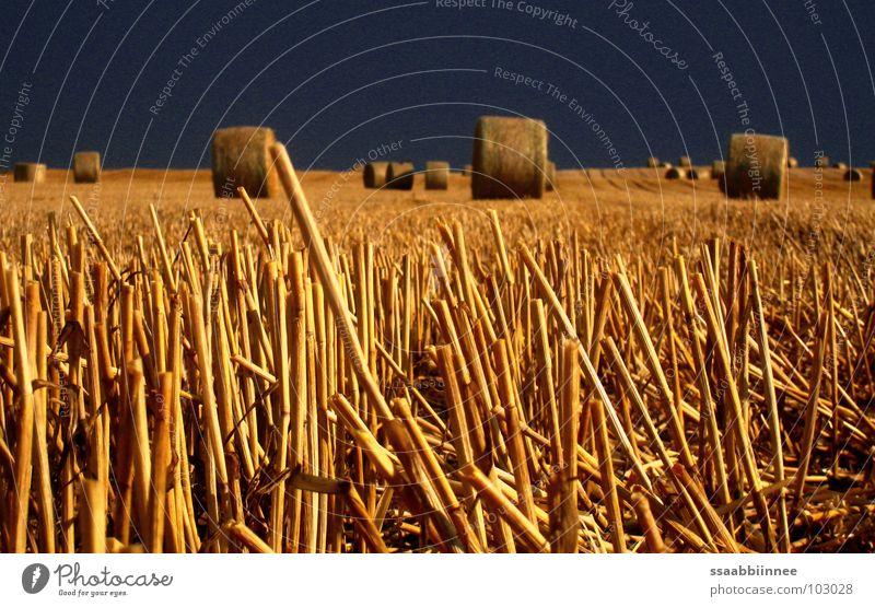 Strohballen nach dem Regen dunkel Feld Sommer Stoppel Getreide Ernte Himmel gold leuchten