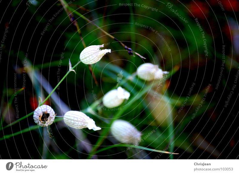 Grünes Zeugs Pflanze Blüte fremd satt Wiese Blume Gras Halm Sommer Garten Park Blütenknospen anonym Wildtier Farbe