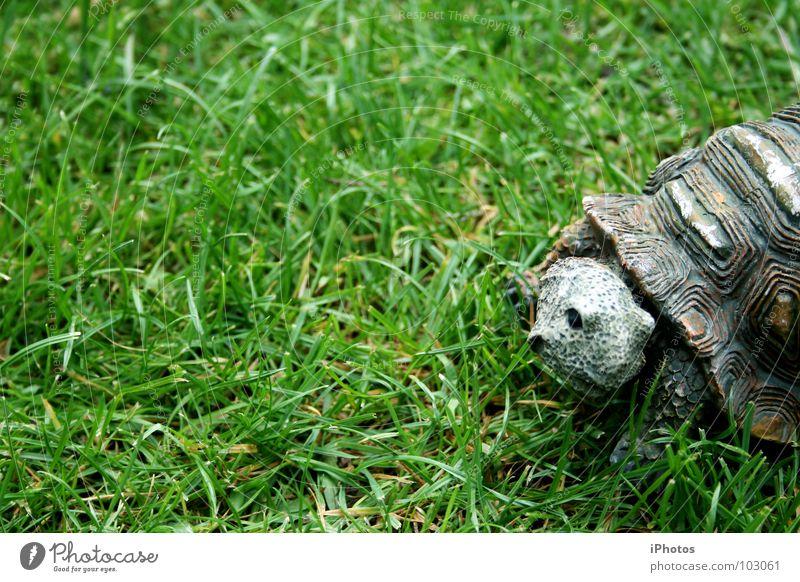 no hero - turtle! Schildkröte Tier Gras grün Wiese Zoo Reptil Gehege Muster Furche Lebewesen rasenmähen Halm langsam entdecken saftig Fressen Sommer Garten