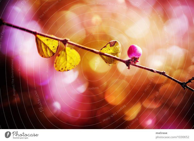 bokehisch Natur grün Blatt Winter Wald schwarz Umwelt Blüte Stimmung rosa glänzend träumen Feld leuchten Wachstum Klima