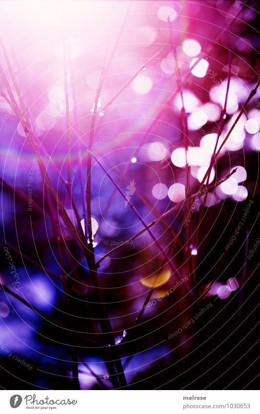 dazzling lights Natur schön Farbe weiß ruhig Winter schwarz Wald Umwelt gelb Stimmung glänzend träumen leuchten Sträucher Wassertropfen