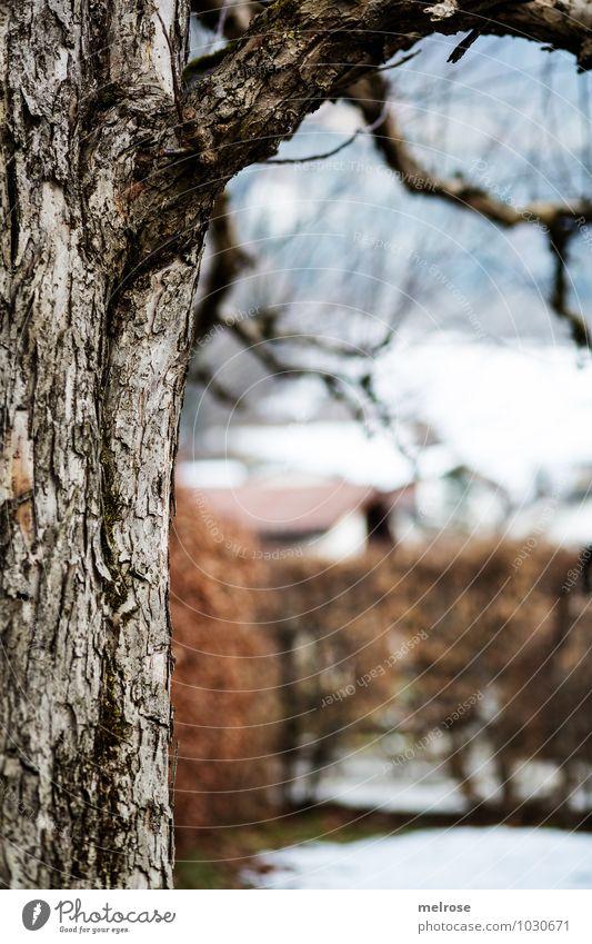 halbe Sache Natur Landschaft Winter Schönes Wetter Eis Frost Baum Zweige u. Äste Sträucher Garten Park Haus Baumhälfte Holz atmen Blühend Erholung hängen