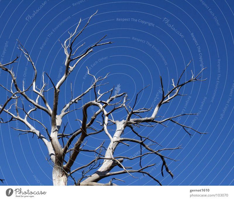 Skelett alt Himmel Baum blau schwarz Tod Holz grau Wärme Regen Trauer Klima Wüste Physik Frankreich Strahlung