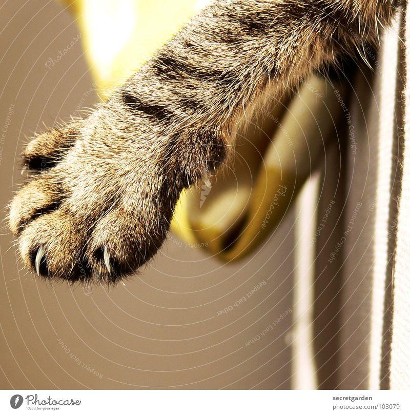 kratzbürste Katze grün schön Sonne Erholung ruhig Wärme Innenarchitektur grau liegen Design Häusliches Leben stehen niedlich Coolness Stoff
