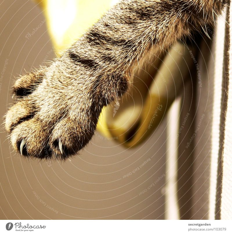 kratzbürste Sofa Katze Krallen Katzenpfote Pfote ausgestreckt hängen gestreift Stoff grün giftgrün Wolle Physik deckend kuschlig grau gemütlich lümmeln