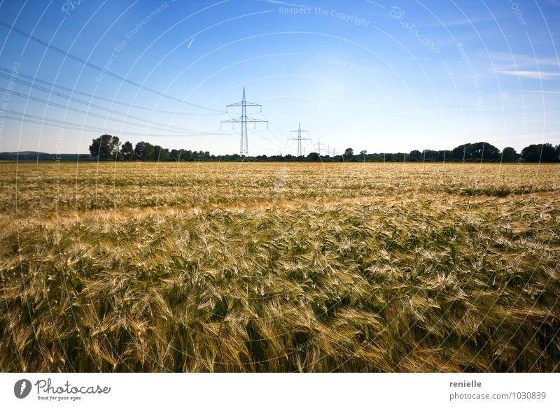 Natur Sommer Erholung Landschaft Leben Wiese Gesundheit Feld Landwirtschaft rein Forstwirtschaft Tatkraft Qualität