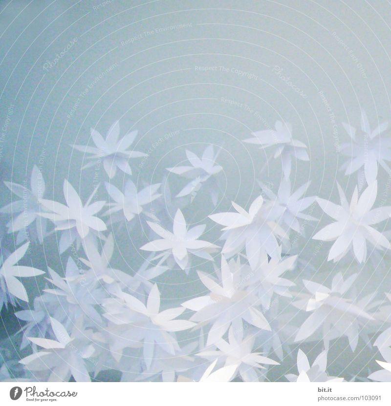 FLOWERPOWER blau weiß Blume Freude Winter Blüte Gefühle Frühling Schnee Glück Kunst Feste & Feiern Design Eis Dekoration & Verzierung Papier