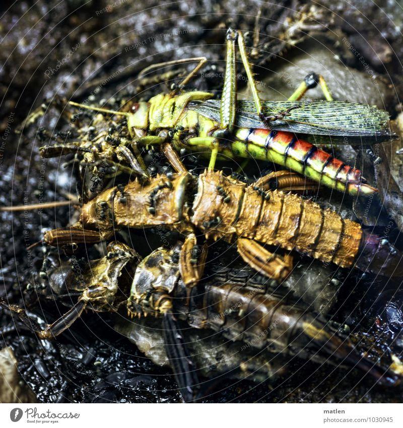 Massengrab Tier 3 Tiergruppe Tierfamilie liegen braun mehrfarbig gelb grün rot schwarz Tod nebeneinander Insekt Ameise Schrecken Farbfoto Menschenleer