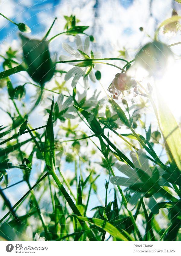 der Frühling naht Stil Design Ferien & Urlaub & Reisen Sommer Kunst Umwelt Natur Pflanze Sonne Blume Gras Grünpflanze Garten Park Wiese Wege & Pfade Blühend