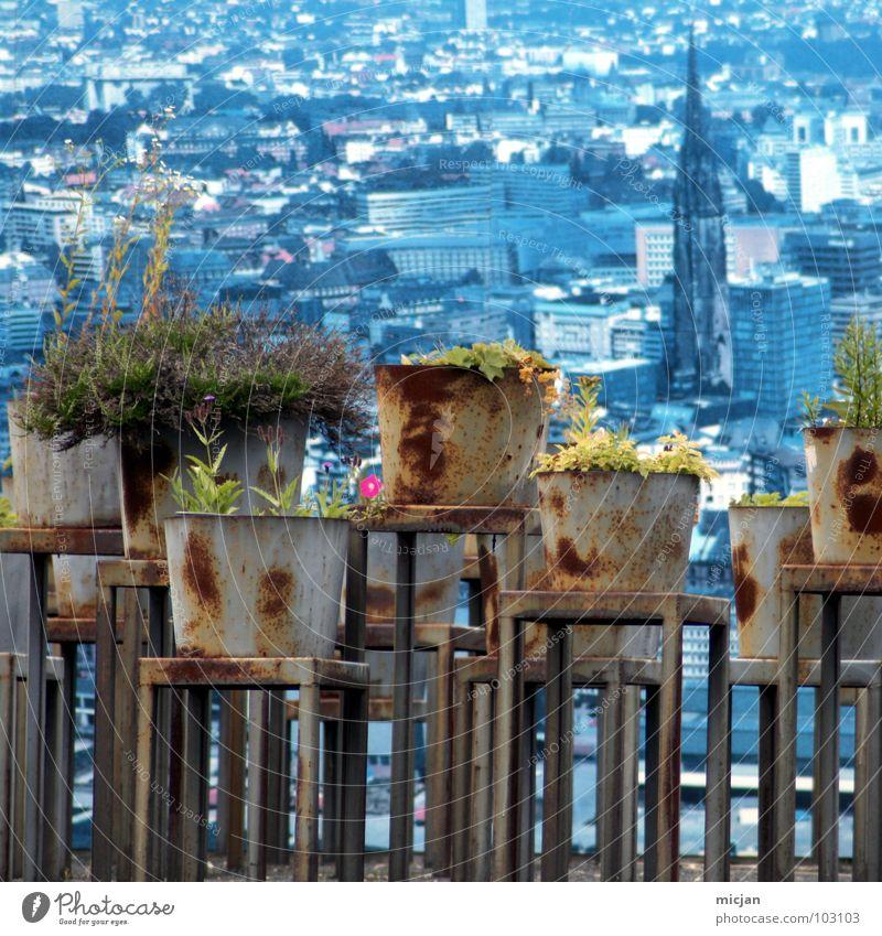 Guuuuuuuuten Mooooorgen! Blume blau Stadt Pflanze rot ruhig orange rosa Hintergrundbild verrückt Tisch Wachstum Aussicht Punkt Tapete Quadrat