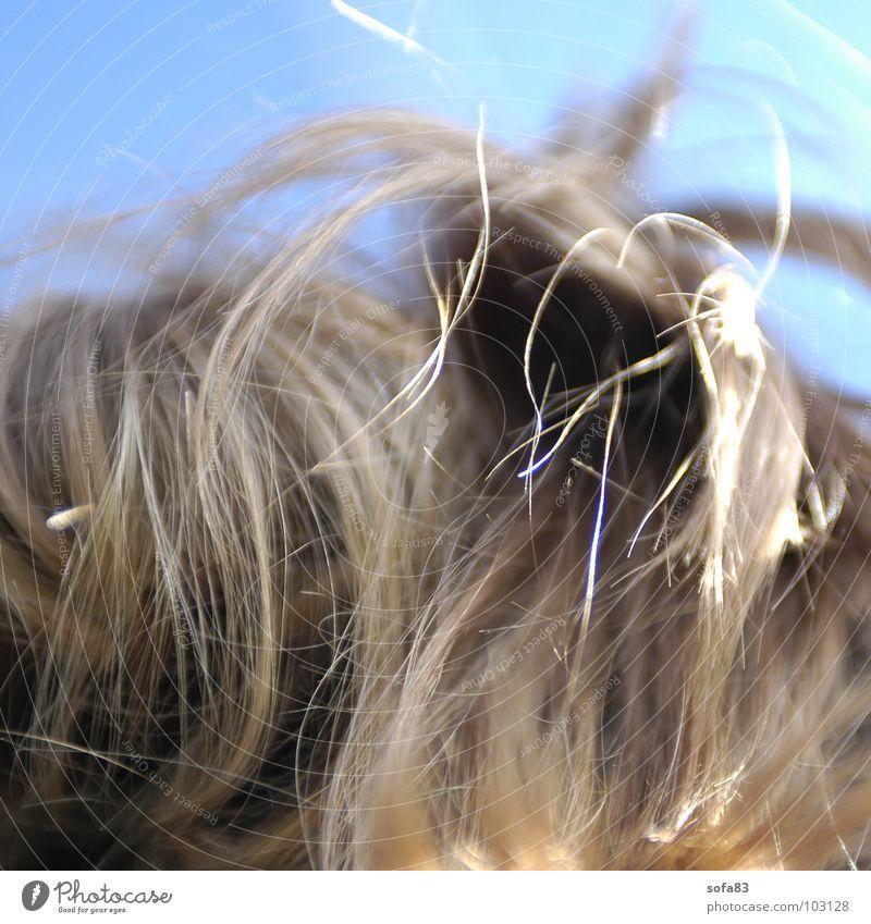 haarig blau schön Kopf Haare & Frisuren braun blond Zopf