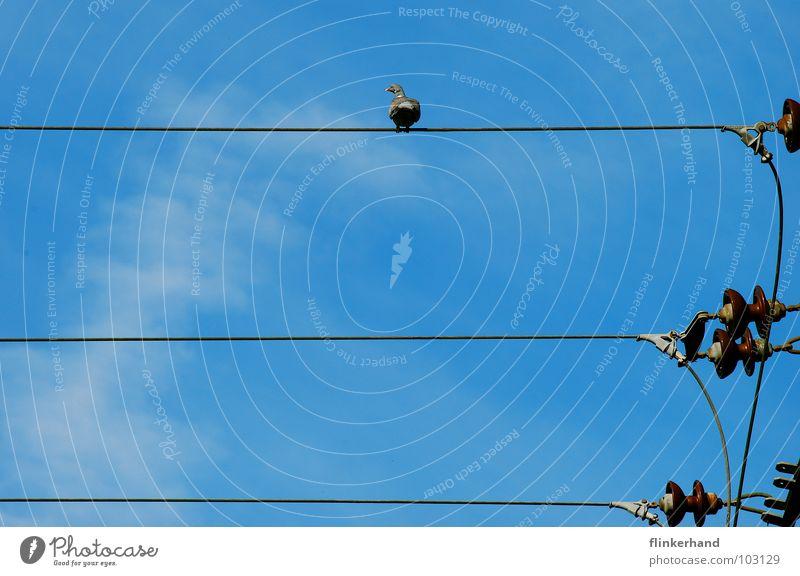 gurru, gurru, gurru Taube Hochspannungsleitung Strommast Elektrizität Wolken Sommer Tier Vogel Himmel Langeweile Leitung blau