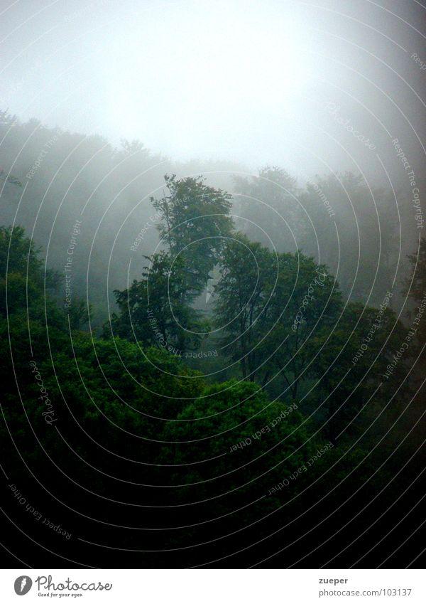 Regenwald Sauerland Baum grün Sommer Einsamkeit Wald dunkel kalt Traurigkeit Regen Landschaft Nebel Trauer geheimnisvoll Hügel Urwald Verzweiflung