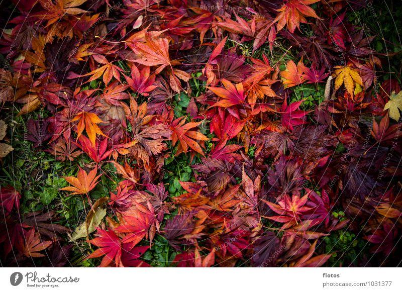 kunterbunt Natur Herbst Pflanze Blatt Grünpflanze Wildpflanze Garten Park Wiese verblüht dehydrieren natürlich unten mehrfarbig gelb grün orange rot