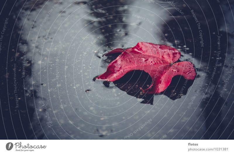Roter Oktober Natur Pflanze Wasser Einsamkeit rot Blatt schwarz kalt Traurigkeit Herbst Gefühle natürlich grau Regen nass Trauer
