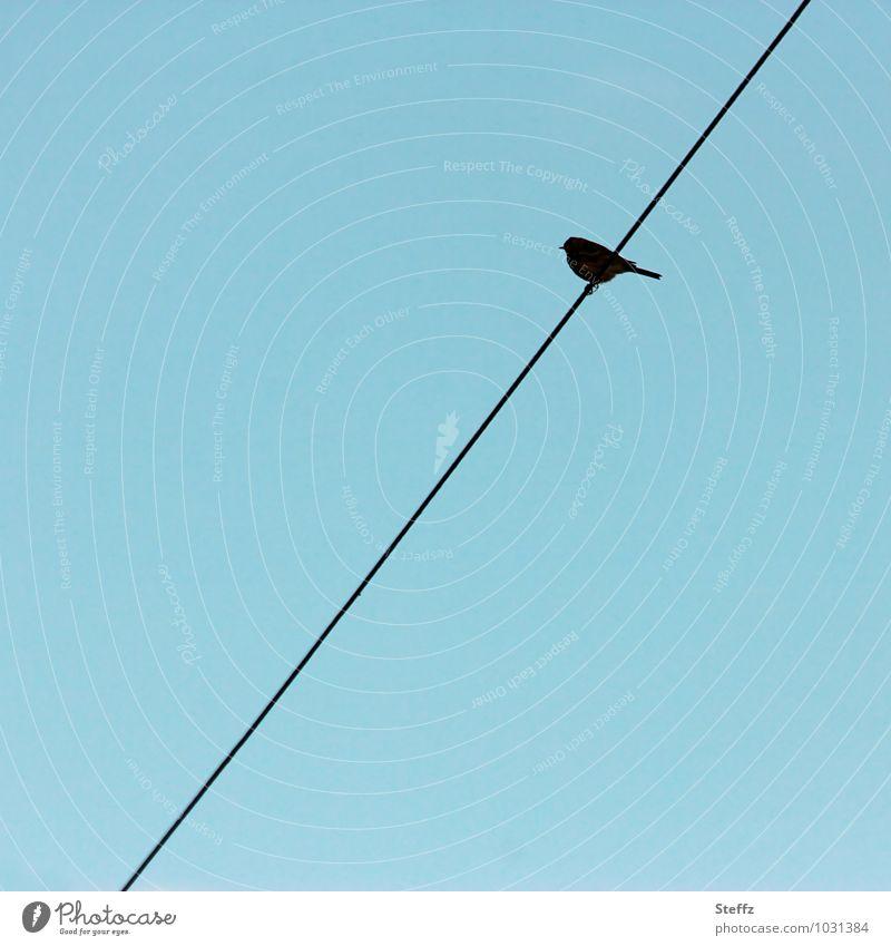 da sein Vogel schräg schräger Vogel zeitlos Dasein minimalistisch reduziert wenig Himmel Drahtseil himmelblau wolkenloser Himmel Silhouette diagonal