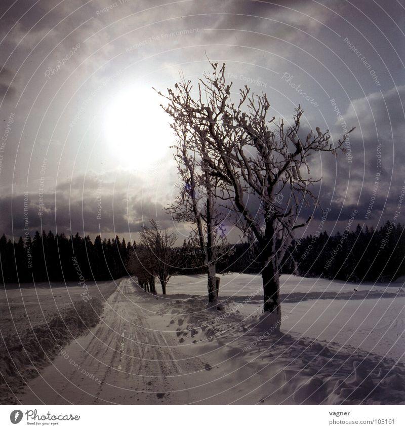 Vogelbeerbäume Himmel Baum Sonne Winter Wolken Straße Schnee Verkehrswege Glätte