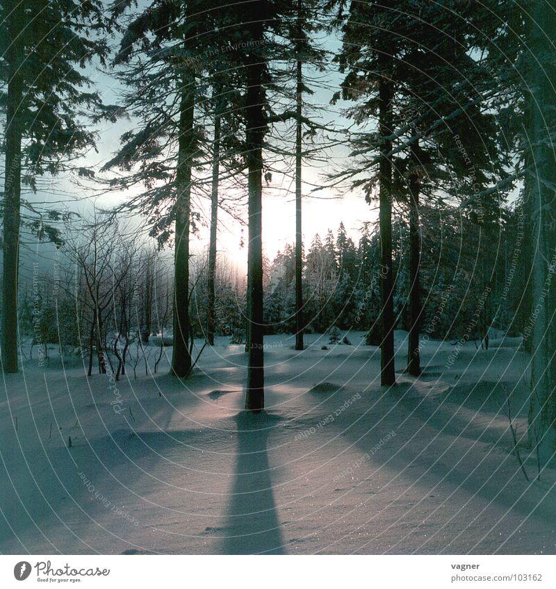 Sonnenuntergang Baum Winter Wald Schnee