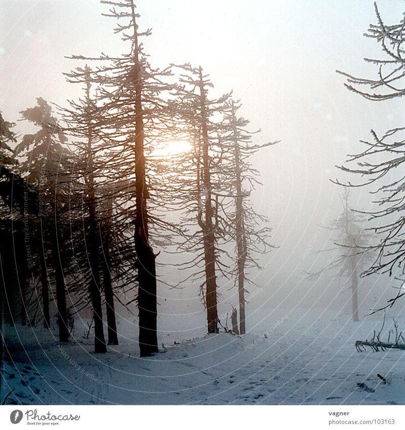 Erzgebirge Baum Winter Wald Schnee Nebel Umweltverschmutzung Saurer Regen
