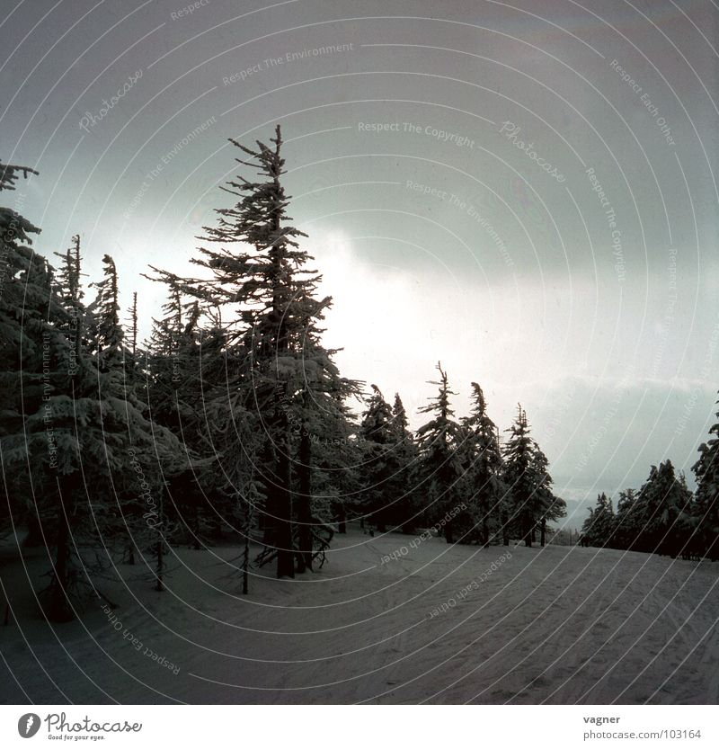 Erzgebirge Natur Himmel Winter Wolken Wald Schnee Umwelt
