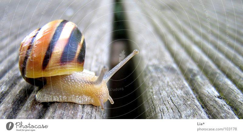 Grenzüberschreitung Tier Garten klein Pause Konzentration Mut Grenze niedlich Balkon Barriere Schnecke Fühler krabbeln langsam Aufgabe Wasserrinne