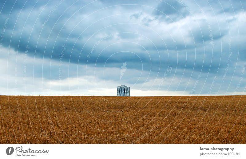 Einsamer Riese III Ernte Weizen Ähren Feld Kornfeld Gerste Landwirtschaft Bauernhof Herbst Fußweg Wiese Spurrinne ländlich Unwetter Wolken schlechtes Wetter